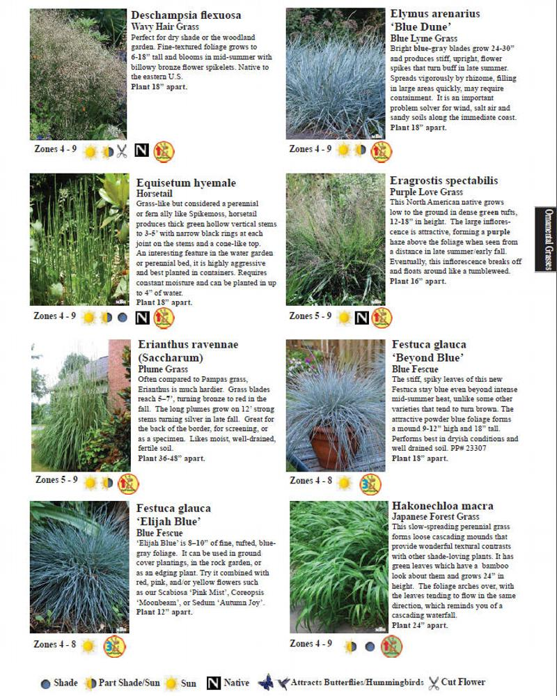 Blue lyme grass blue dune -  Please Scroll To Bottom To See Definitions Of Deerleerious Grading